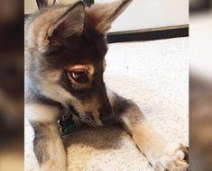 A este perrito se le permitió elegir un nuevo amigo en el refugio. ¡Espera a ver quién es!