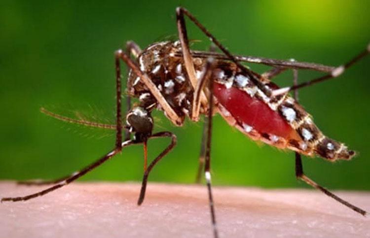 ¿Te pican los mosquitos más que a otras personas? Esto es lo que significa ...