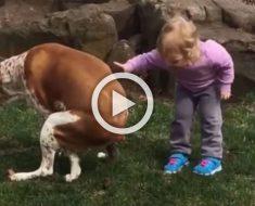 Reto del día: ¿Puedes ver este video más de 10 segundos sin reírte? Apostamos a que no puedes ...