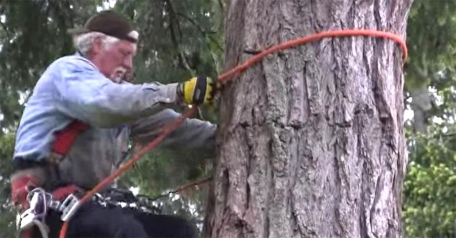 Sube hasta un árbol de 12 metros para encontrar esto en su copa, increíble ...