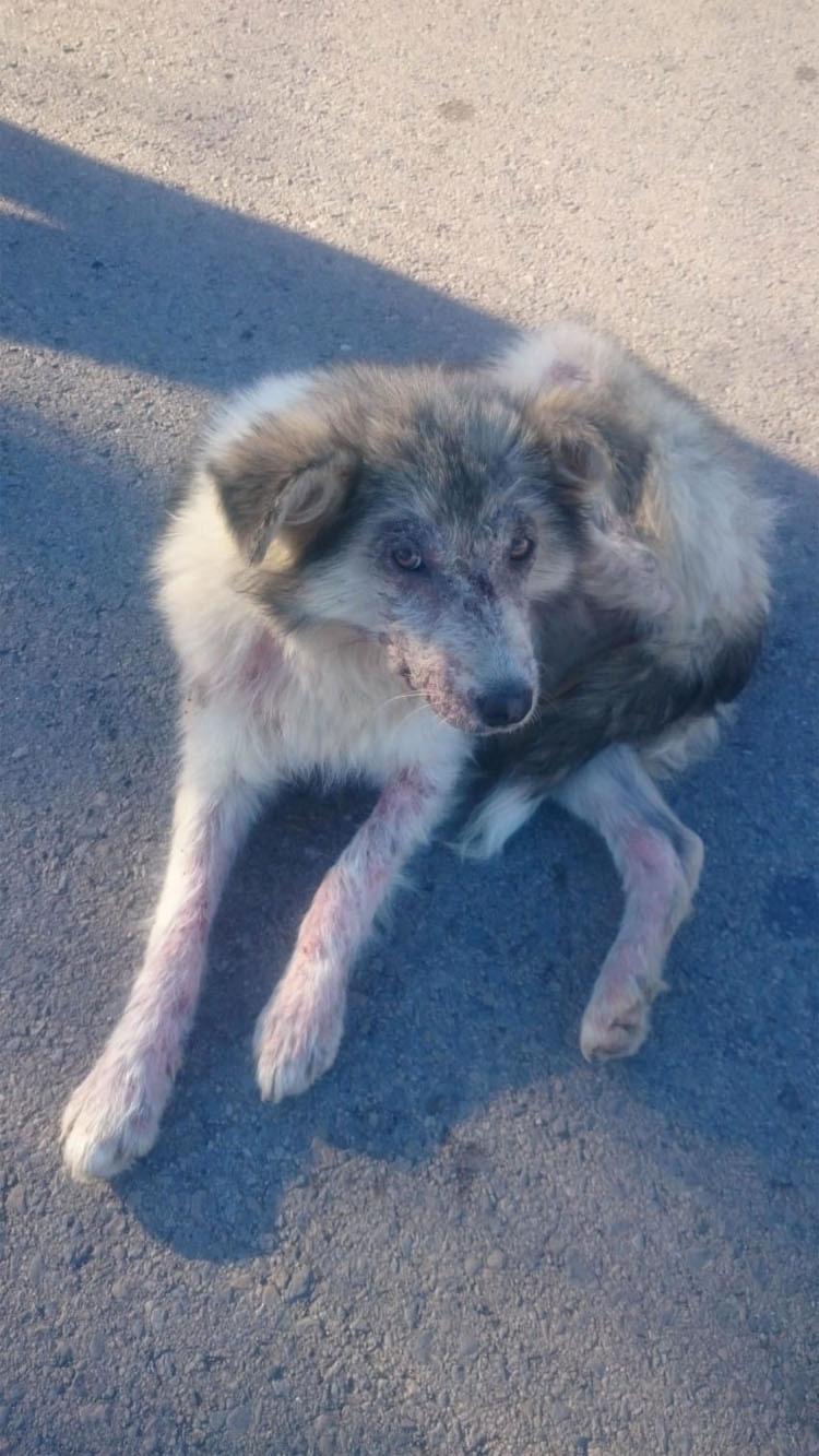 Unos niños estaban tirando piedras a este perro callejero. ¿Su respuesta? ¡INCREÍBLE!
