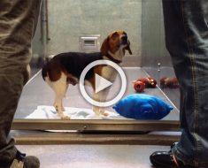 El emotivo vídeo viral de la perrita Suzie que te hará llorar...