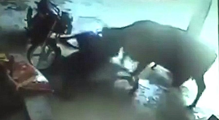 Unos asaltantes tratan de agredir a una niña. Ahora mira la reacción de la vaca...