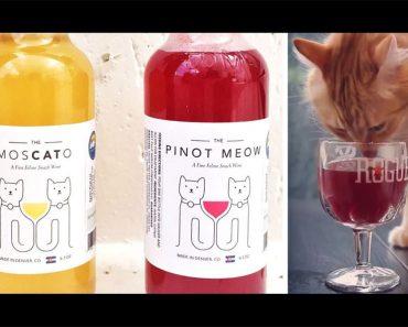 Convierte a tu gato en un compañero de copas gracias a los nuevos vinos para gatos