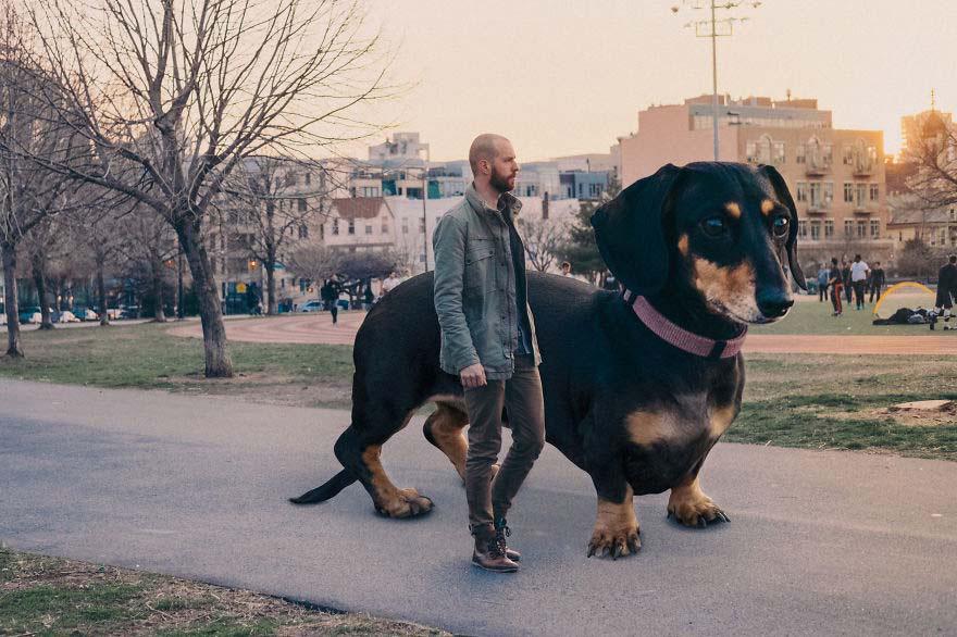 Su dueño decidió hacer GRANDE a su pequeña perrita. ¡Tienes que verlos! [6 FOTOS]