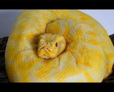 Esto parece una serpiente al principio, pero cuando se mira más de cerca ...