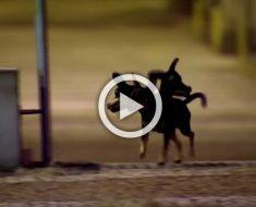 En plena noche son sorprendidos por un cachorro con tres cabezas. Esta es su reacción...