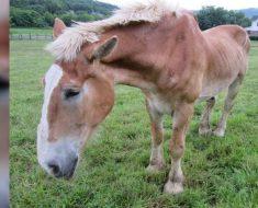 Llevan a este viejo caballo a un santuario. Entonces descubren la horrible verdad ...