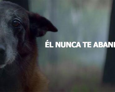 La nueva campaña contra el abandono de mascotas que hará que te emociones