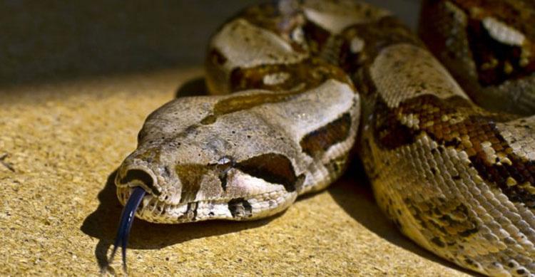 Dormía todas las noches con una serpiente. Hasta que la veterinario le dijo la verdad