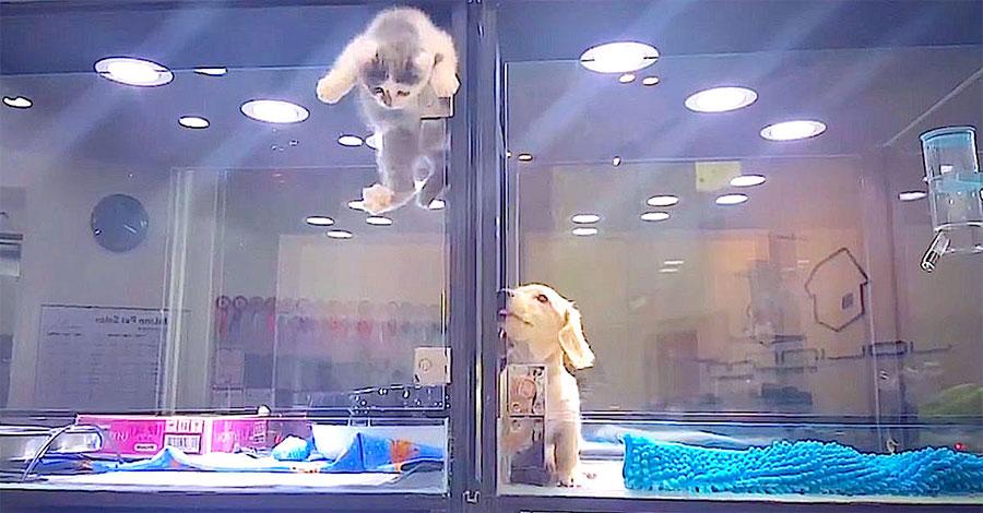 El perrito está solo en la tienda de mascotas. Ahora observa lo que hace el gatito ...