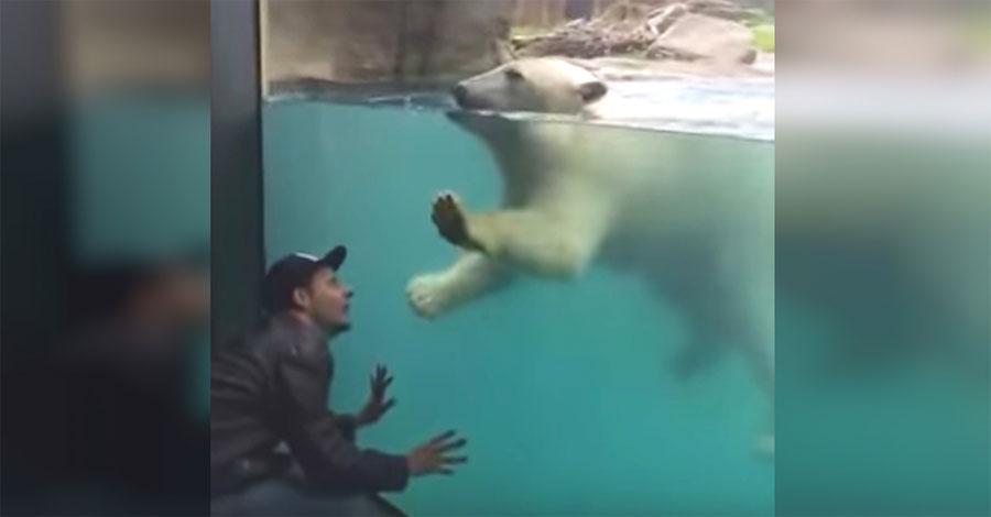 Un hombre se pone en cuclillas delante de un oso polar. Ahora observa la reacción del oso...