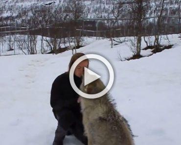 Un enorme lobo se pone frente a ella, ahora mirad lo que sucede cuando hacen contacto visual