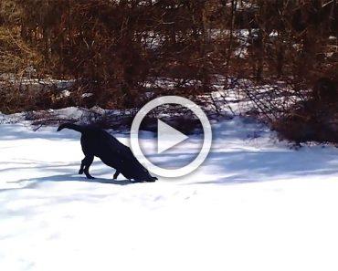 Estaban disfrutando de un día de nieve cuando vieron a su perro haciendo esto, ¡¿QUÉ?!