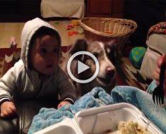 """Esta madre trata de que su bebé diga """"mamá"""", pero la reacción del perro hizo la escena VIRAL..."""