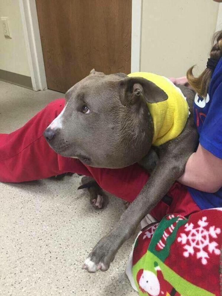 El aspecto de este perro sorprende al equipo de rescate. Luego ven lo que tiene en el cuello...