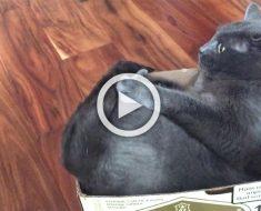 ¿Has visto a un gato hacer ESTO? Cuando su dueño lo pilla no puede parar de reír...