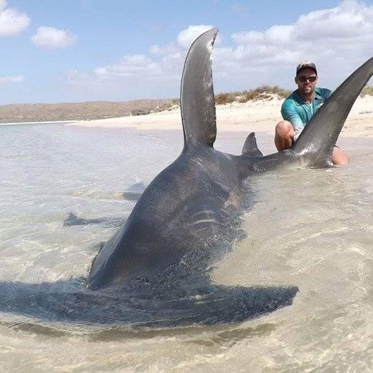 Arrastró a 10 tiburones fuera del océano sólo para hacerse selfies con ellos 2