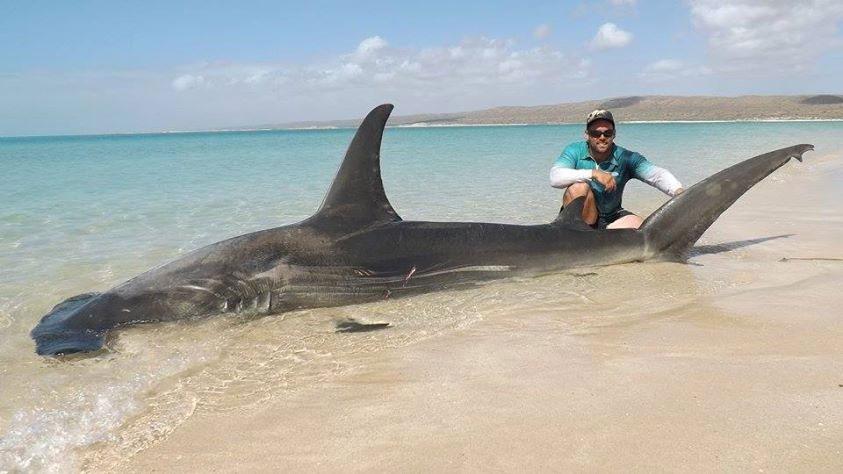 Arrastró a 10 tiburones fuera del océano sólo para hacerse selfies con ellos 3