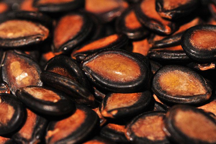 Hierve semillas de sandía por una razón de la que nunca había oído hablar...