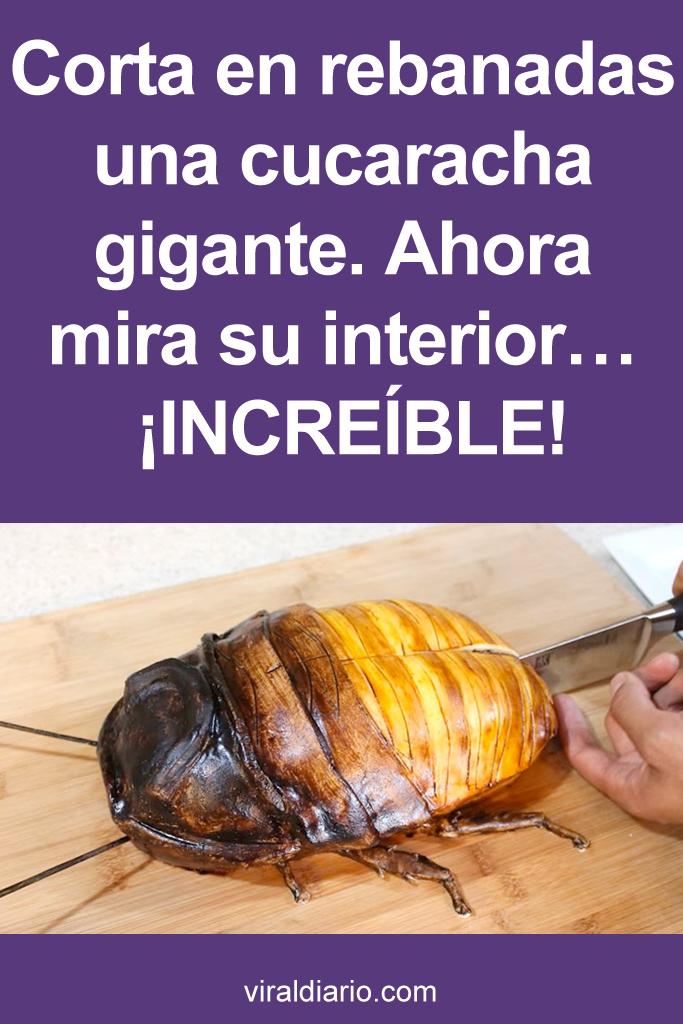 Corta en rebanadas una cucaracha gigante. Ahora mira su interior... ¡INCREÍBLE!