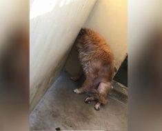 La familia de este perro lo dejó en un refugio. La razón es absolutamente exasperante
