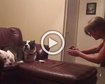 Su dueña quiere hacerle una foto a su perro pero este reacciona de la manera más divertida...