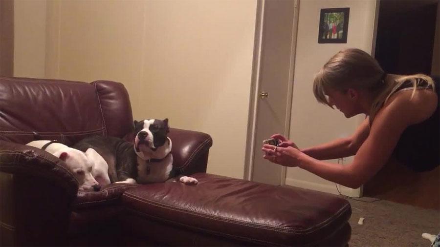 Su dueña quiere hacerle una foto a su perro pero este reacciona de la manera más divertida... 1