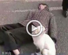 Este hombre se desmayó en medio de la calle. ¿Qué hace su pequeño perro? ¡Extraordinario!