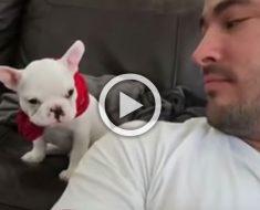 Mira cuando a este inteligente cachorro se le dice que es guapo ... ¡Su respuesta es divertidísima!