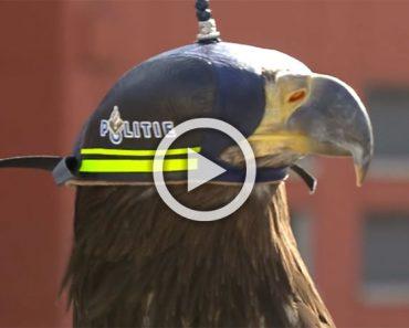Así es como la policia holandesa hace uso de águilas entrenadas para derribar drones