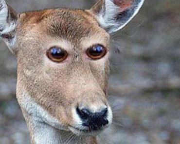 Cómo se verían estos 8 animales si tuvieran los ojos en la parte frontal. Atención al #4