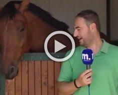 Este caballo hace imposible que este reportero de noticias puede mantener una cara seria