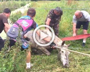 Unos ciclistas rescatan a un caballo aterrorizado momentos antes de morir ahogado