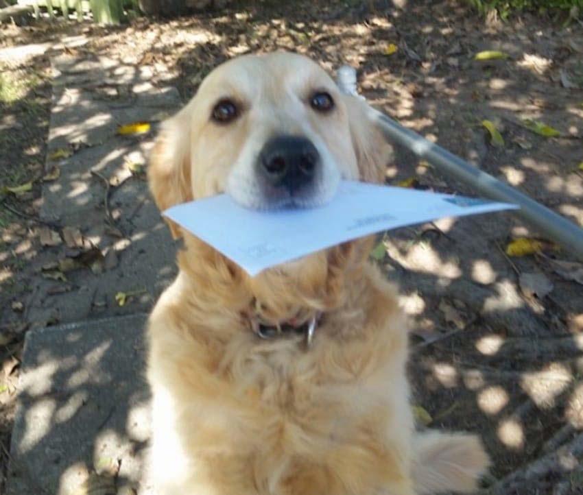 A un cartero se le ocurre una forma creativa para satisfacer a un perro cuando no hay correo