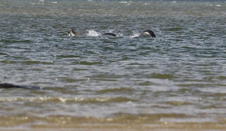 Al final parece ser que se ha capturado una foto real del monstruo del Lago Ness - Y da miedo