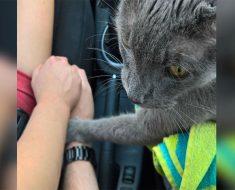 Este gato reconforta a sus dueños, con el corazón roto, en el viaje final al veterinario