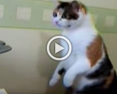 Este gato siente curiosidad por un extraño objeto... ¿Cómo acaba el encuentro? ¡Hilarante!