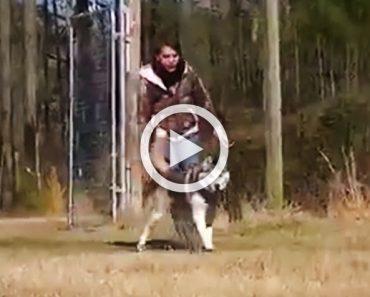 Este perro ha estado toda su vida encadenado. Mira lo que hace cuando corre libre por primera vez