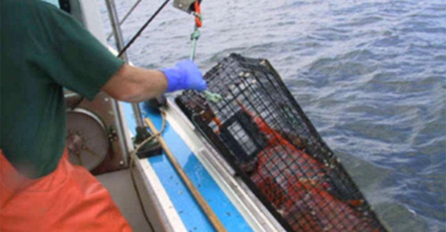 Este pescador capturó algo tan extraño, que tuvo que entregarlo a un acuario