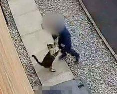 Cámaras de seguridad capturan a un niño de 5 años haciendo lo impensable a su gato