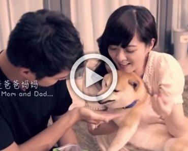 La historia de un perrito que hizo llorar al mundo entero (y que todos deberíamos conocer)