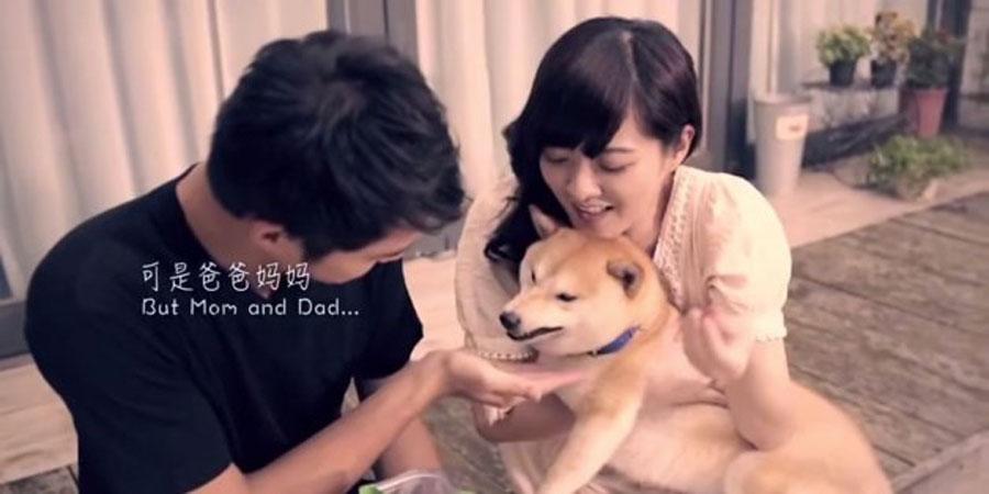 La historia de un perrito que hizo llorar al mundo entero (y que todos deberíamos conocer) 1