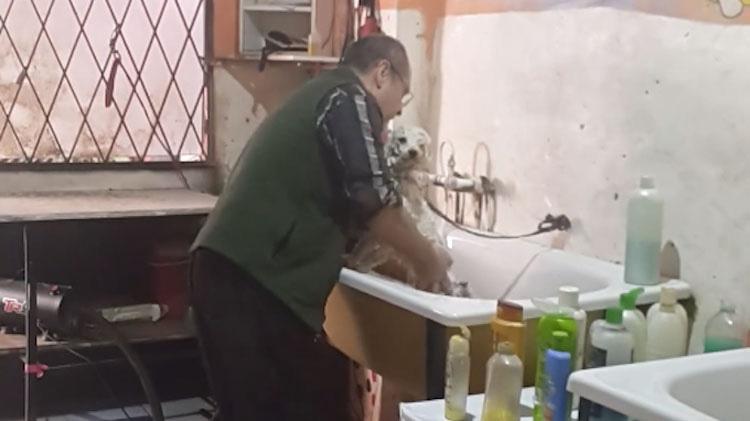 La mujer comienza a grabar en secreto cuando sorprende al peluquero haciendo esto a un perro mojado