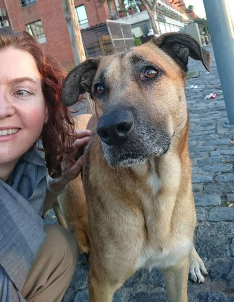 Una mujer se hace amiga de un perro sin hogar en la calle. Después él hace algo que nunca olvidará