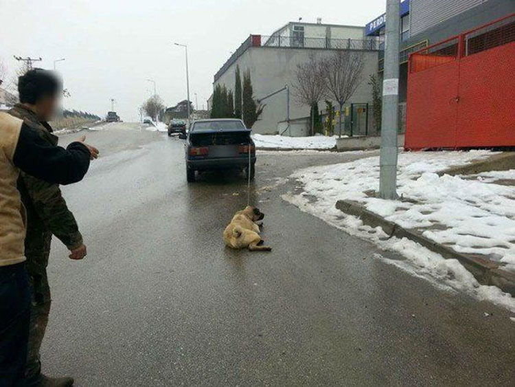 """Este hombre fue filmado arrastrando a su perro detrás de su coche para """"estirar sus extremidades"""""""