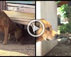 Su dueño se negó a desencadenar a su perro durante 10 años - hasta que un vecino decidió liberarlo