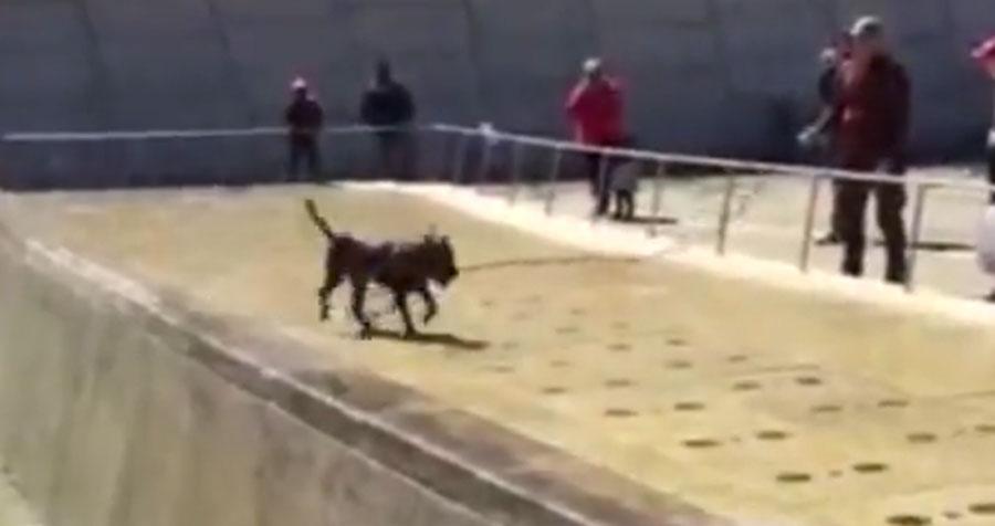 Este perro jugando en una fuente es lo mejor que verás hoy...