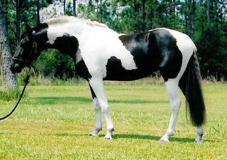 21 caballos con los colores más bellos y únicos del mundo. Atención al color 13