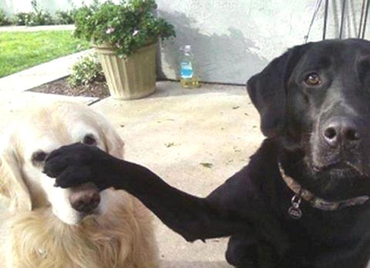 Esta es la razón por la que a tu perro le gusta sentarse en tus pies. ¡No tenía idea!